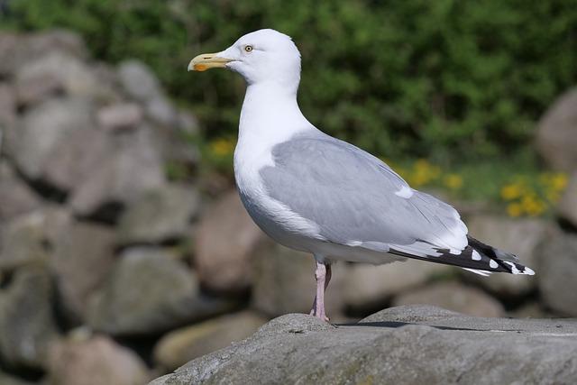 Nature, Bird, Gull, Water Bird, Animal World