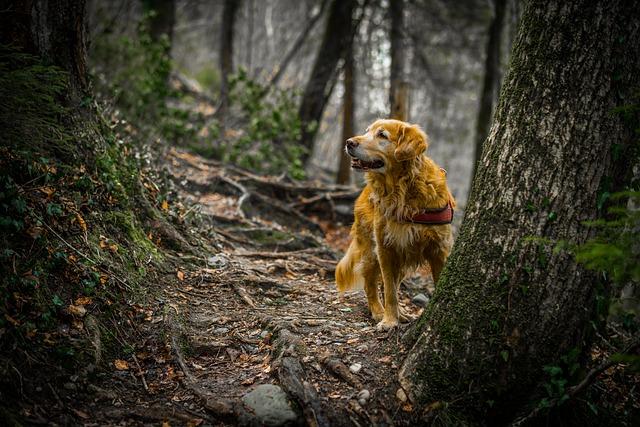 Nature, Wood, Tree, Animal World, Environment, Mammal
