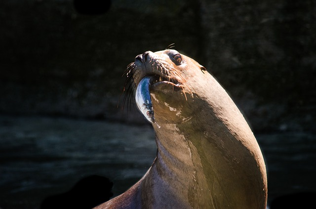 Nature, Waters, Animal World, Sea, Mammal, Maehnenrobbe