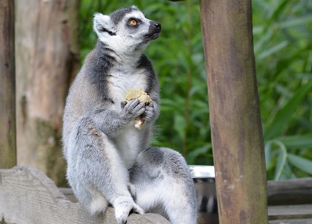 Animal World, Nature, Mammal, Animal, Cute, Primate