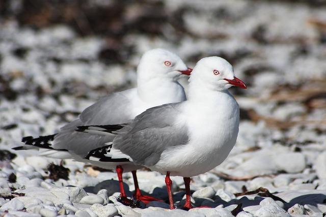 Bird, Animal World, Nature, Seagull