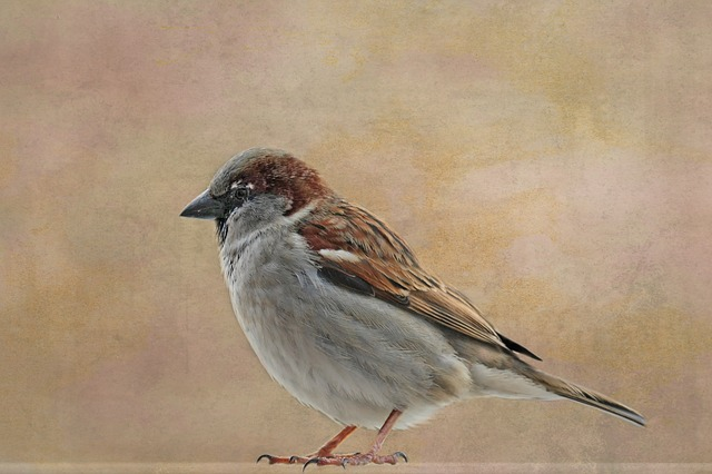 Bird, Animal World, Sparrow, Nature