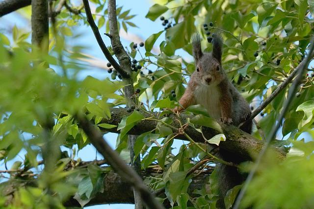 Tree, Nature, Animal World, Animal