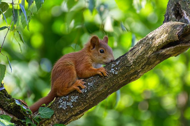 Squirrel, Young, Young Animal, Mammal, Animal, Nature