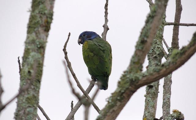Birds, Parrot, Tree, Nature, Wild Life, Animalia