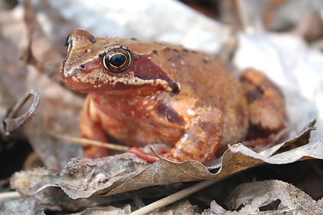 Nature, Animals, Amphibians Bezogonowe