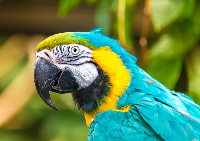 Animals, Nature, Parrot, Zoo, Bird, Colorful, Color