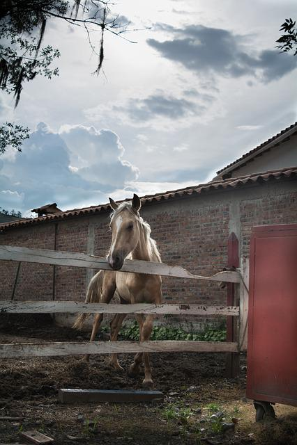 Horse, Refuge, Nature, Animals, Free, Portrait, Pets