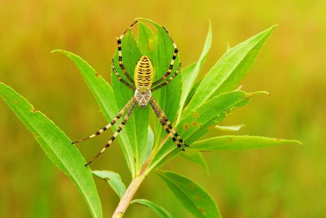Tygrzyk Paskowany, Arachnid, Insect, Animals, Nature