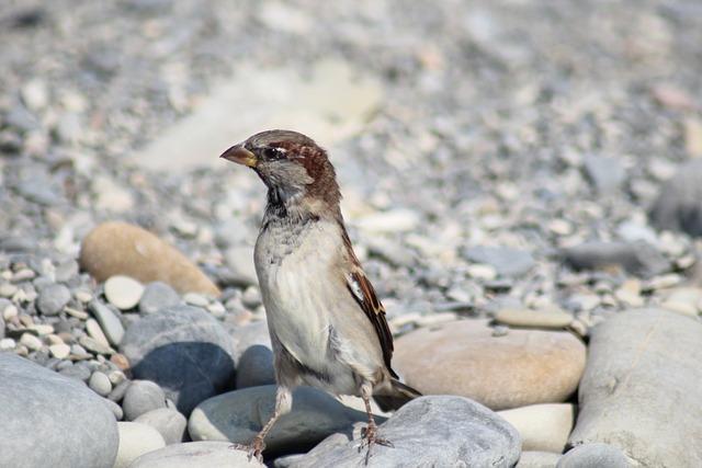Nature, Living Nature, Bird, Animals, Outdoors, Little