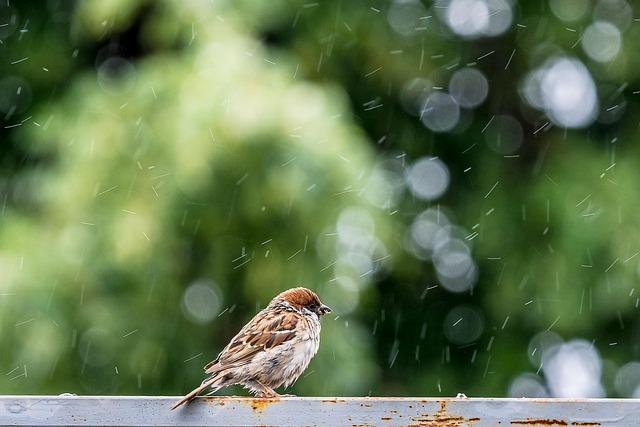 Birds, Sparrow, Rain, Animals, Nature, Plumage