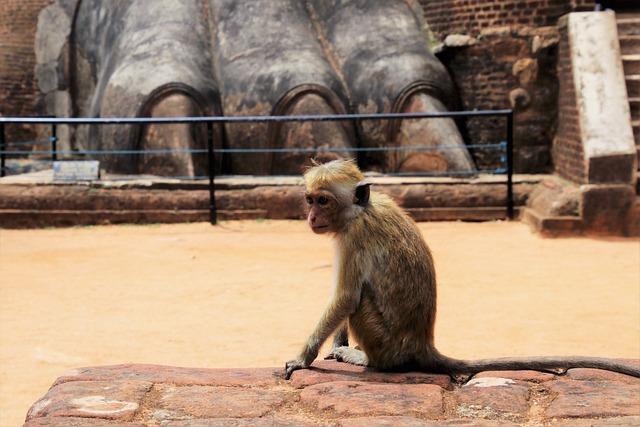 Nature, Mammals, Travel, Monkey, Animals, Wild