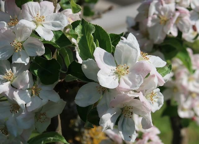 Flower, Plant, Nature, Garden, Flowers, Apple Blossom