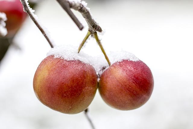 Apple, Frost, Frozen, Winter, Snow, Ice, Nature, Freeze