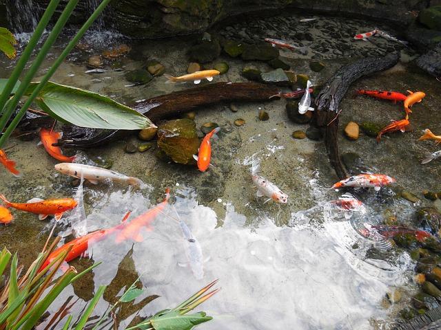 Colorful Fishes, Fish Pond, Fishes, Nature, Aquarium