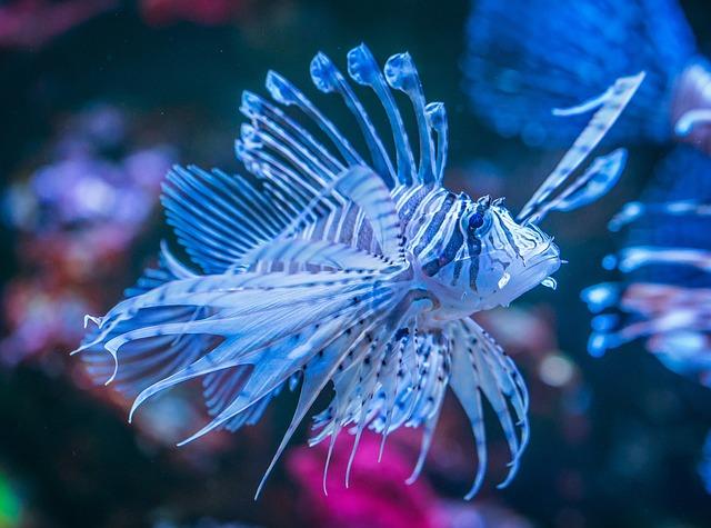 Fish, Aquarium, Nature, Undersea World