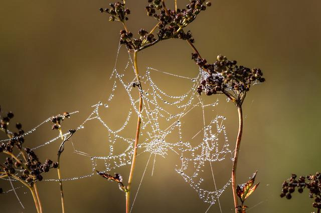 Spider, Cobweb, Arachnid, Nature