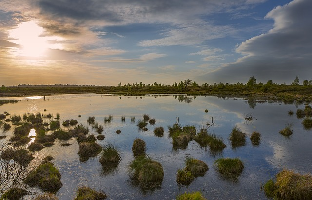 Ardennes, Landscape, Moor, Water, Nature, Natural Water