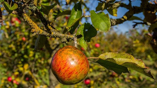 Fruit, Nature, Tree, Leaf, Apple, Harvest, Autumn