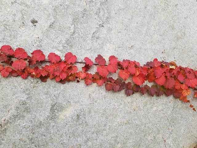 Autumn, Autumn Leaves, Nature, Leaf, Ivy, The Vine