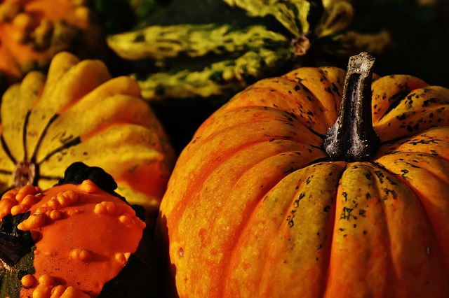 Pumpkins, Decorative Squashes, Nature, Autumn