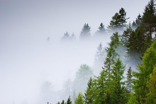 Forest, Selva, Fog, Trees, Nature, Tree, Autumn, Trunk