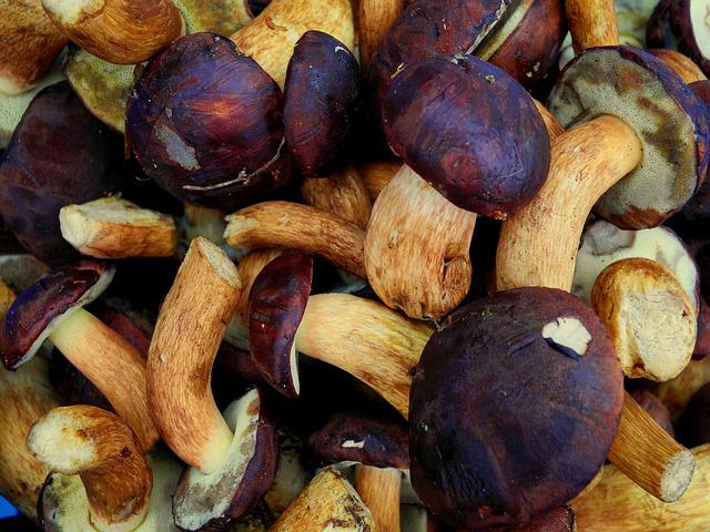 Mushrooms, Wild Mushrooms, Fungus, Autumn, Nature