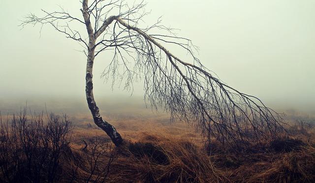 Fog, Moor, Moorland, Birch, Tree, Mood, Autumn, Nature