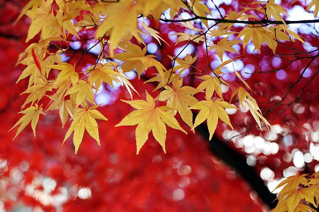 Autumn Leaves, Autumn, The Leaves, Nature, Colorful