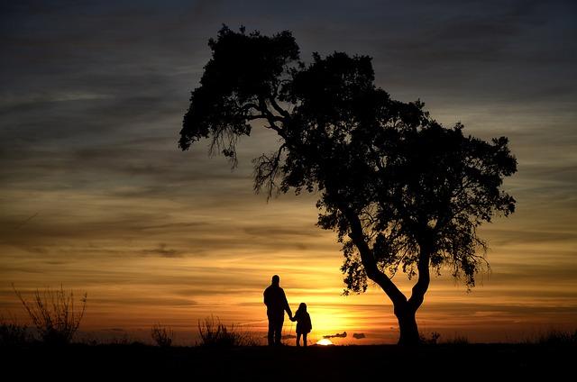 Backlight, Nature, Sunset