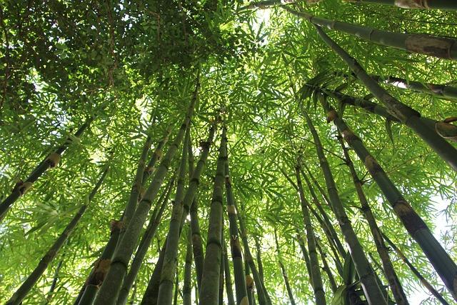 Free Photo Tropical Vegetation Zen Plant Tropical Bamboo