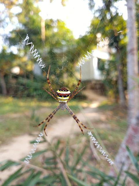 Spider, Outdoor, Nature, Bangladesh