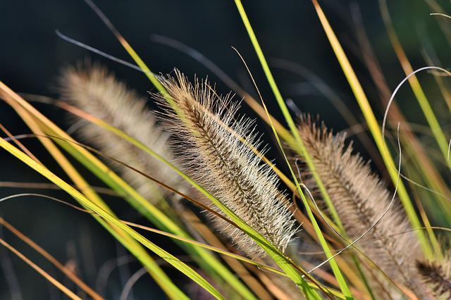 Reed, Plant, Landscape, Grass, Bank, Nature