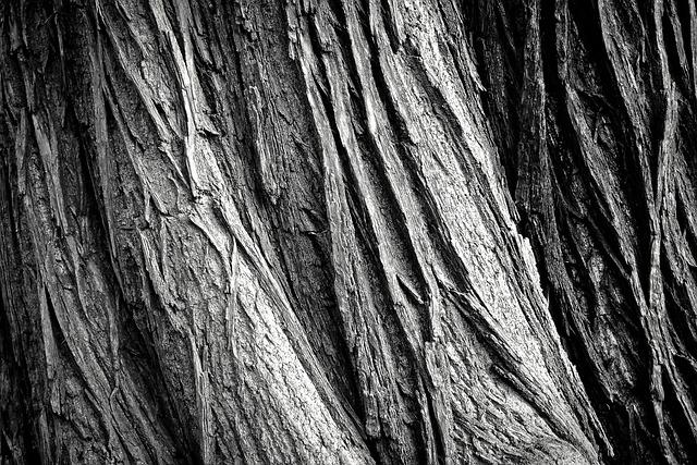 Tree, Tree Bark, Log, Nature, Tribe, Wood, Bark, Forest