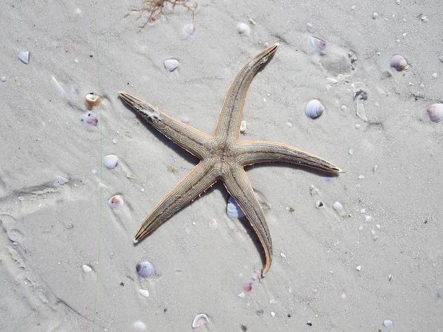 Starfish, Ocean, Sea, Water, Tropical, Beach, Nature