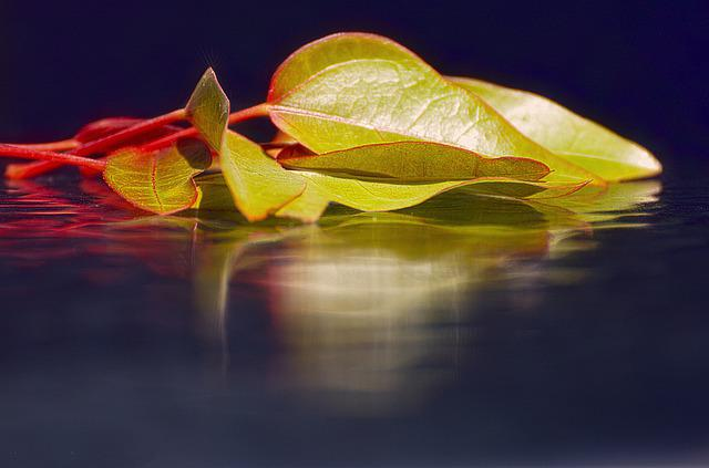 Nature, Leaf, Desktop, Flora, Color, Beautiful, Bright