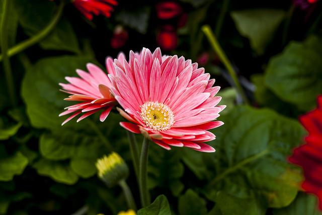 Beauty Flower, Flower, Nature, Plant, Petal