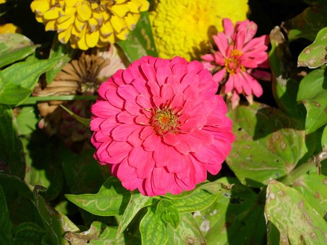 Flower, Nature, Beauty, Macro, Sunny Day, Summer