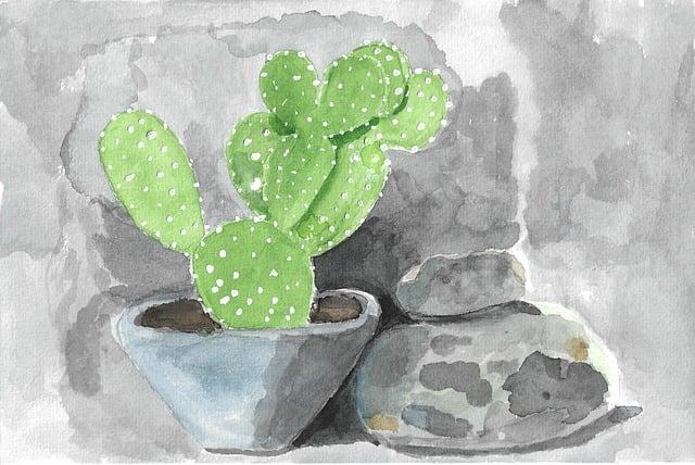 Nature, Cactus, Cacti, Beaver-tail Cactus, Rocks, Stone