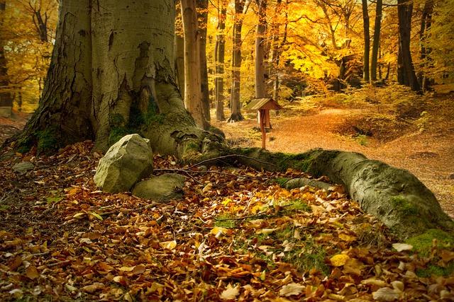 Beech Forest, Bučina, Beech, Colors, Nature, Forest