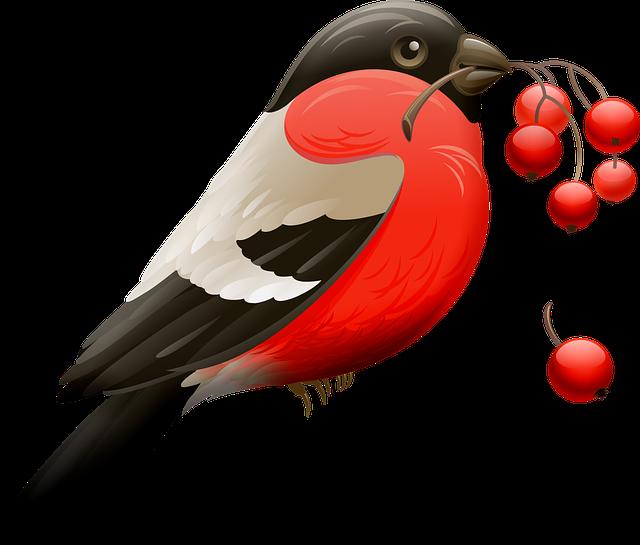 Red Robin, Berry, Red Berries, Bird, Nature, Animal