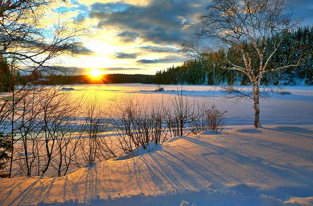 Sunset, Winter, Nature, Cold, Sky, Trees, Birch, Clouds
