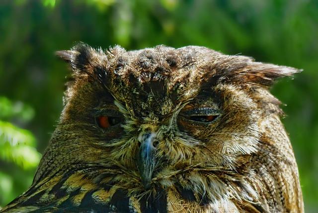 Nature, Animal World, Bird, Owl, Eagle Owl, Animal