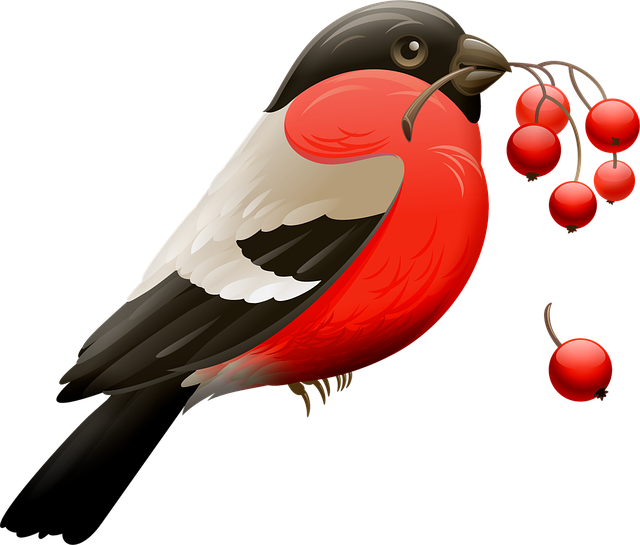 Red Robin, Berry, Red Berries, Bird, Nature, Animal