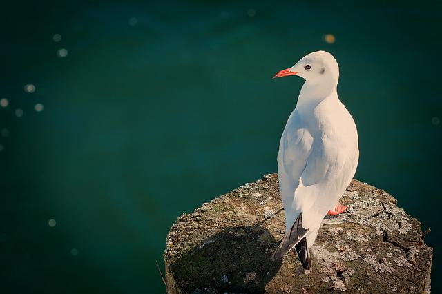 Nature, Bird, Animal World, Seagull, Water