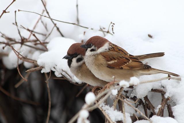Bird, Nature, Living Nature, Winter, Animals, Outdoors