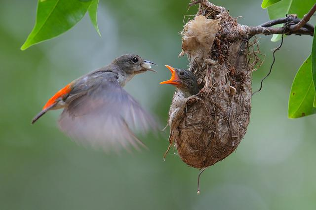 Bird Child Care, Birds, Bird, Fly, Vietnam, Nature