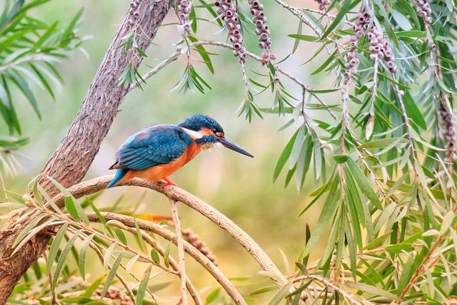 Kingfisher, Bird, Nature, Wildlife, Animal, Color