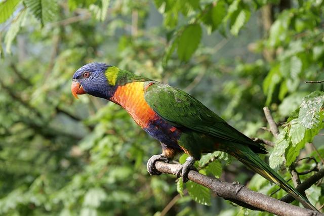 Bird, Nature, Loris, Exotic Bird, Colorful, Plumage
