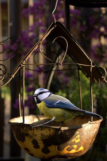 Bird, Feeding, Garden, Nature